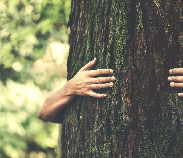 arbres-communiquent-entre-eux-4